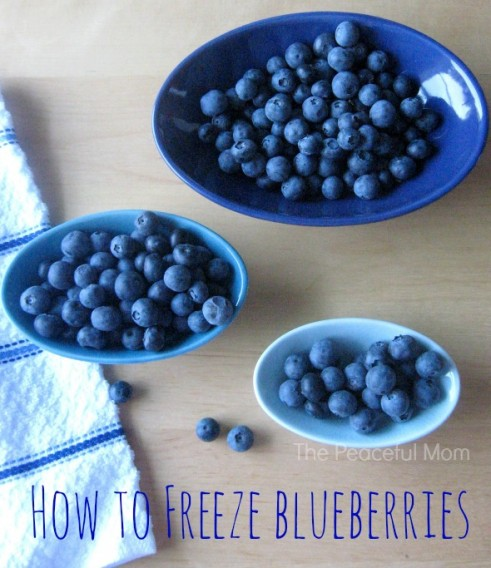 How to Freeze Blueberries - The Peaceful Mom