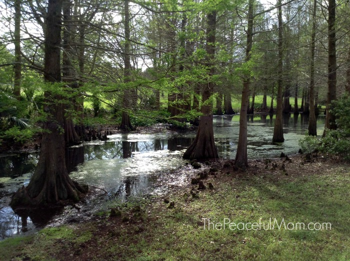 Connect with God through nature -- The Peaceful Mom