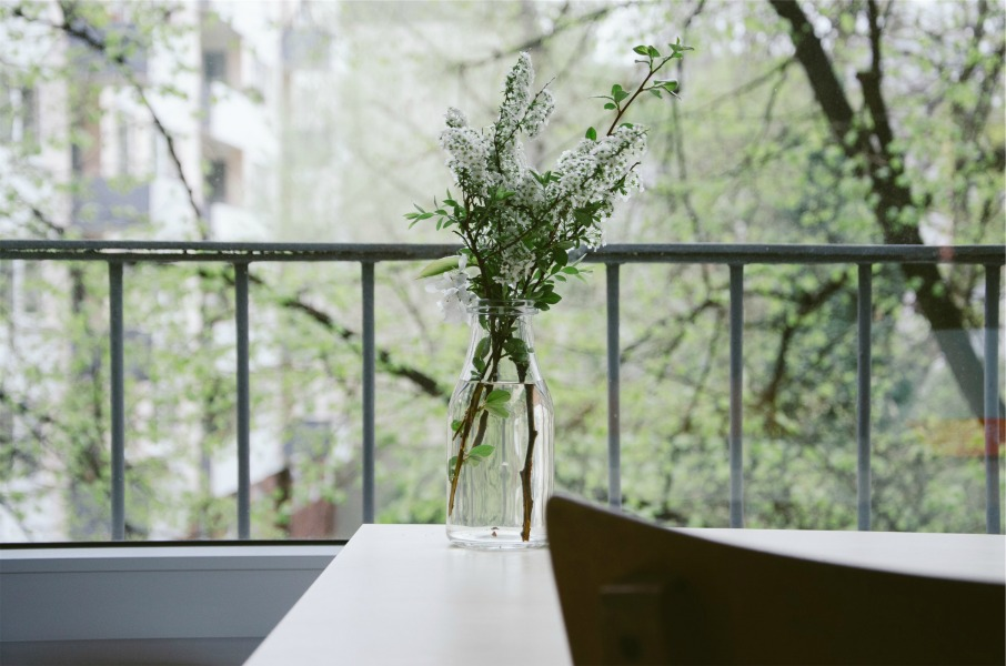 plant on table 900 x 600